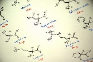 Citrulline-Leucine : le duo pour entretenir et prendre de la masse musculaire